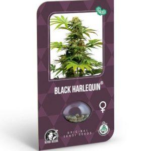black harlequin sensiseeds 2