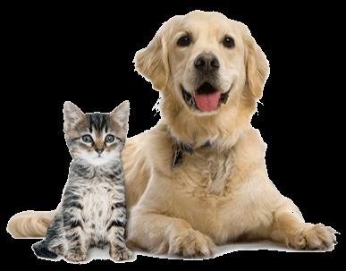 cannabidiol pour animaux