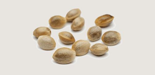capsules au cannabidiol
