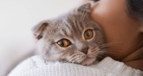 chat blessé
