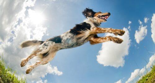 hyperactivite canine